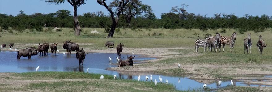 des parcs à Botswana