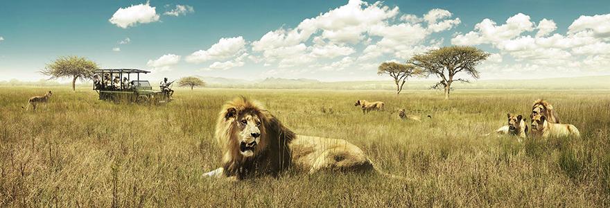 Aventure du safari